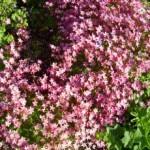 Blumen im Garten von Haus Rennsteigrose